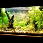 「タニシ×飼育」!熱帯魚とタニシは共存できるの?水草を入れるメリットは?