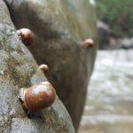 殻×藻類」!サザエの殻に着くのは?タニシの殻に着くのは?