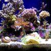 タニシ 金魚 水槽 相性 共存