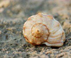 メダカ 石巻貝 タニシ